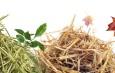Collecte des végétaux à domicile